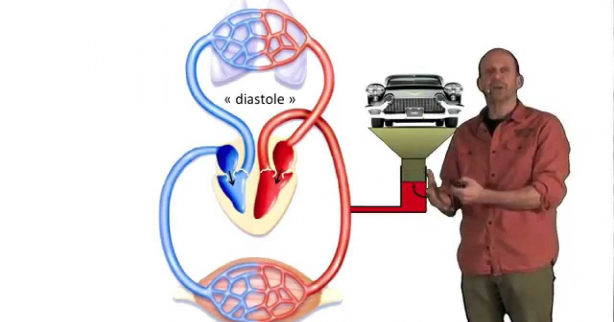 Mesure de la tension artérielle - Clipedia - La science et moi